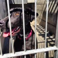 Photo taken at Pasadena Humane Society & SPCA by James S. on 3/24/2013