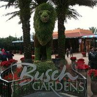 Photo taken at Busch Gardens Tampa by CJ S. on 12/15/2012