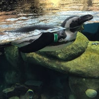Photo taken at Penguin Tank by Michael Y. on 10/16/2015