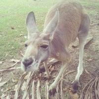 Photo taken at Australia Zoo by Dmytro O. on 1/22/2013