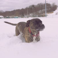 Photo taken at Normanskill Dog Park by Dylan B. on 2/14/2014