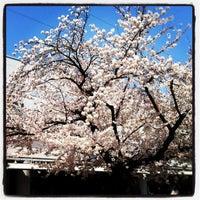 Photo taken at Sengawa Station (KO13) by Atsushi H. on 4/9/2012