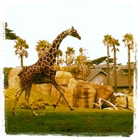Photo taken at San Francisco Zoo by Salvador M. on 2/26/2013