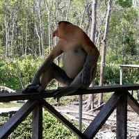 Photo taken at Labuk Bay Proboscis Monkey Sanctuary by shah.haizad on 7/26/2015