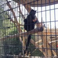 Photo taken at Monkey Exhibit by Georgia P. on 12/28/2013