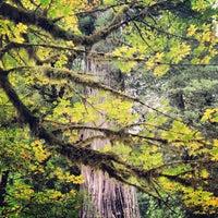 Photo taken at Big Tree by Joshua C. on 10/8/2013