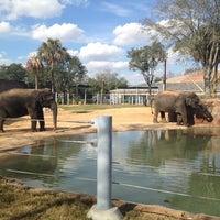 Photo taken at Houston Zoo by Scott J. on 1/20/2013