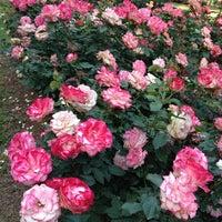 Photo taken at Raleigh Rose Garden by Kristal K. on 5/26/2013