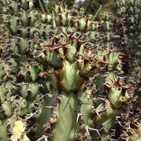 Photo taken at Succulent Garden by Eric A. on 1/25/2014