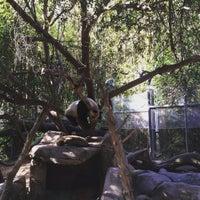Photo taken at Giant Panda Research Station by ibotch on 12/26/2015