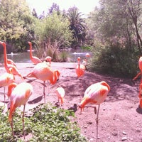 Photo taken at Sacramento Zoo by RoseMarie M. on 4/2/2013