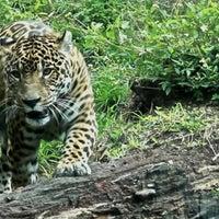 Photo taken at Zoo Miami by William John R. on 4/16/2013