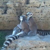 Photo taken at Tanganyika Wildlife Park by Joshua P. on 6/11/2013