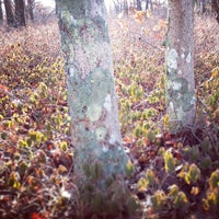 Photo taken at Manuel F. Correllus State Forest by Graham S. on 1/17/2013
