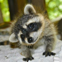 Photo taken at Wildlife Center Of Virginia by Tammy F. on 7/19/2014