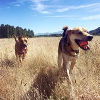 Photo taken at Thousand Acres Dog Park by Kim S. on 8/28/2016