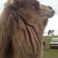 Photo taken at West Midland Safari & Leisure Park by Emma on 2/3/2013