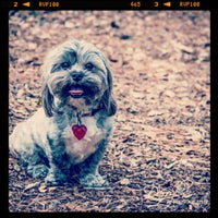 Photo taken at Tamarac Dog Park by Darryl H. on 2/19/2013