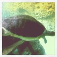 Photo taken at Zoo Miami by Sergey B. on 10/12/2012