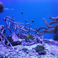 Photo taken at John Pennekamp Coral Reef State Park by Pietro V. on 2/23/2014
