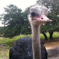 Photo taken at Natural Bridge Wildlife Ranch by Mark N. on 9/29/2012