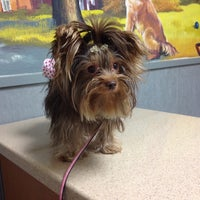 Photo taken at Ahwatukee Commons Vet by Jen K. on 5/28/2014