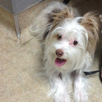 Photo taken at Ahwatukee Commons Vet by Jen K. on 6/3/2014