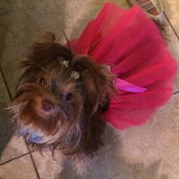 Photo taken at Ahwatukee Commons Vet by Jen K. on 6/11/2014