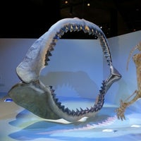 Photo taken at Houston Museum of Natural Science by Yamin M. on 12/18/2012