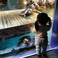 Photo taken at Osaka Aquarium Kaiyukan by Paul A. on 4/5/2013