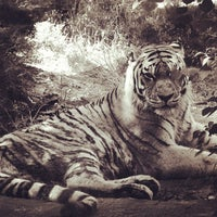 Photo taken at Zoo de Granby by Phil H. on 9/3/2012