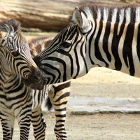 Photo taken at Zoo Berlin by Zoologischer Garten Berlin on 4/15/2014