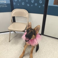 Photo taken at Petco by Carly R. on 10/8/2016