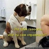 Photo taken at www.dog-star.com.ua by Денис В. on 10/31/2014