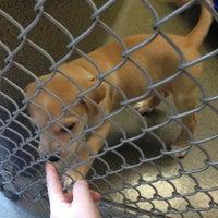 Photo taken at Animal Welfare League of Arlington by Jamie D. on 9/5/2013