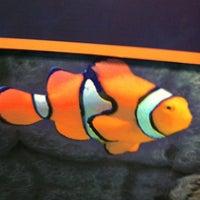 Photo taken at Sea Life Aquarium by Ryan B. on 11/30/2012