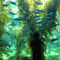 Photo taken at Birch Aquarium At Scripps Institution of Oceanography by Krysten M. on 4/5/2013