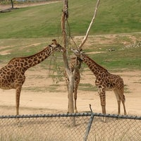 Photo taken at Safari Tram by Merrilee A. on 3/27/2013