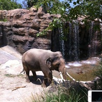 Photo taken at Los Angeles Zoo and Botanical Gardens by Monica O. on 6/12/2013