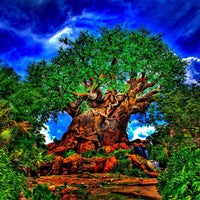Photo taken at Disney's Animal Kingdom by Michael C. on 2/20/2013