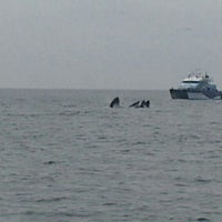 Photo taken at New England Aquarium Whale Watch by Alexey K. on 5/8/2013