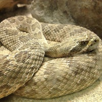 Photo taken at ABQ BioPark Zoo by Chris M. on 1/2/2013
