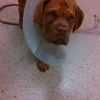 Photo taken at Fox Valley Veterinary by Renee M. on 4/11/2014