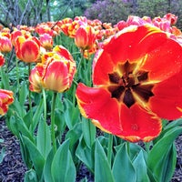 Photo taken at Sherwood Gardens by Schmamie on 4/30/2013