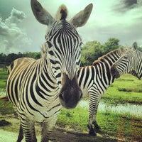 Photo taken at Lion Country Safari by Katrina M. on 6/11/2013