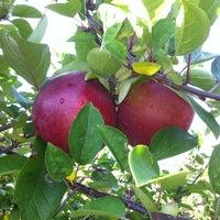 Photo taken at Applecrest Farm Orchards by Samantha C. on 10/20/2012