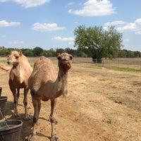 Photo taken at Sharkarosa Wildlife Ranch by Carlos G. on 8/18/2013