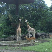 Photo taken at Taman Safari Indonesia II by abdi k. on 1/3/2013