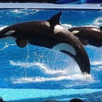 Photo taken at SeaWorld Orlando by Lara M. on 4/6/2013