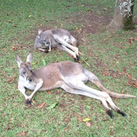 Photo taken at Australia Zoo by Seiichi T. on 7/11/2013